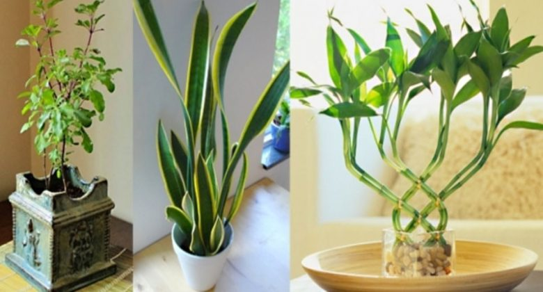 Picture for vastu plants for your house