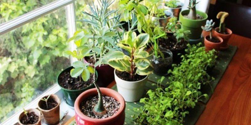 वास्तु शास्त्र में पेड़-पौधों से भी होता है उपचार