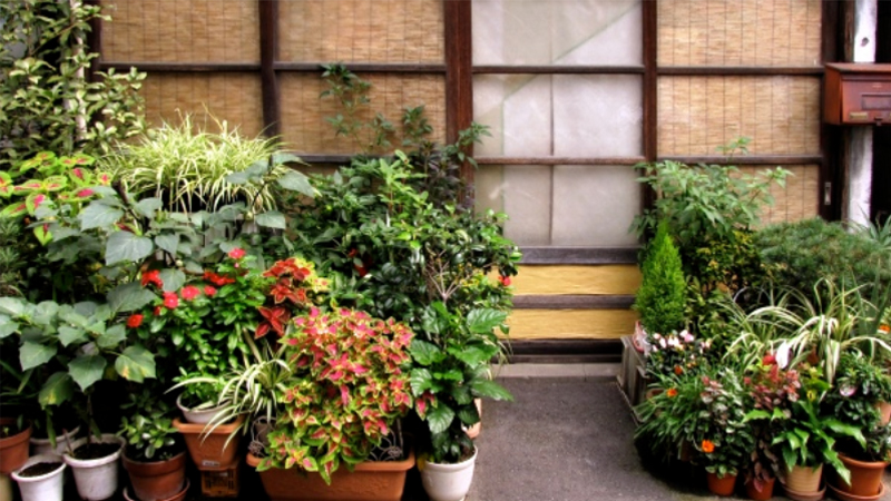 Picture for vastu plants for home garden